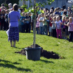Photo of students standing near sapling at Mill Creek Elementary