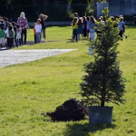 Photo of sapling at Mill Creek Elementary