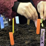 Photo of Wilson Elementary teacher planting seeds